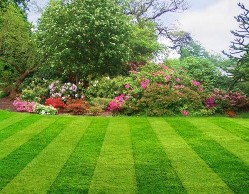 Lawn Care in Midlothian TX