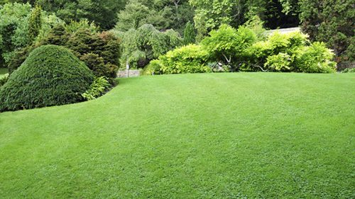 Lawn Care in Waxahachie TX