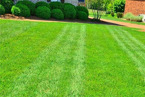 service-lawn-maintenance