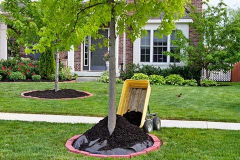 service-mulch-installation